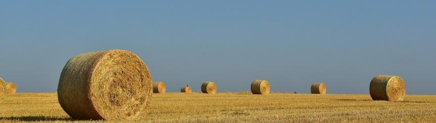Wsparcie dla rolników poszkodowanych przez COVID-19 i suszę Kliknięcie w obrazek spowoduje wyświetlenie jego powiększenia