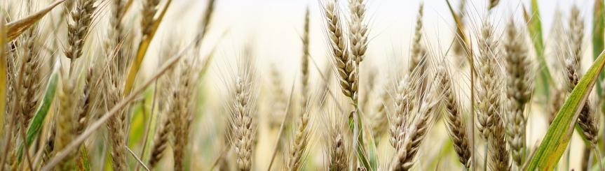 Umowy dzierżawy gruntów rolnych do potwierdzenia przez Wójta Gminy Kliknięcie w obrazek spowoduje wyświetlenie jego powiększenia