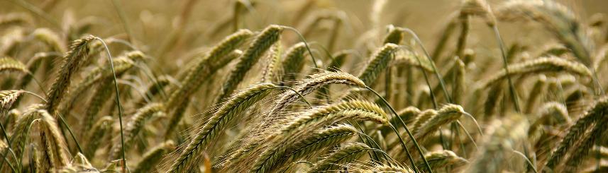 Rolnicy mogą składać wnioski o pomoc finansową Kliknięcie w obrazek spowoduje wyświetlenie jego powiększenia