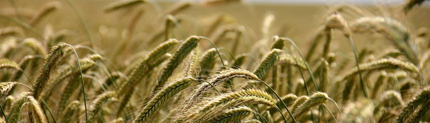 Zwrot podatku akcyzowego zawartego w cenie oleju napędowego wykorzystywanego do produkcji rolnej w roku 2021 Kliknięcie w obrazek spowoduje wyświetlenie jego powiększenia